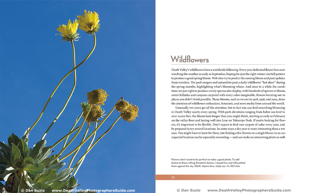 Death Valley Photographers Guide - Wildflowers